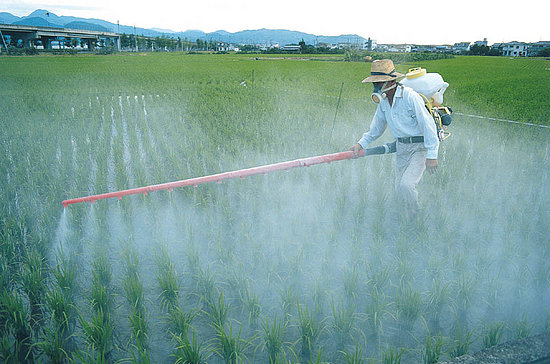 Post image for Pesticide May Contribute to ADHD, But More Research Needed