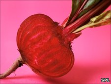 Post image for Nitrate content 'behind blood pressure benefits of beetroot juice'