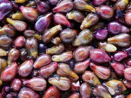 Grape seeds - resveratrol